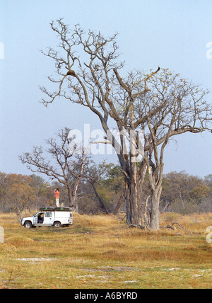 Tourist National Park Moremi Botswana - Stock Photo