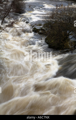 The River Dee in spate flowing through Llangollen North Wales - Stock Photo