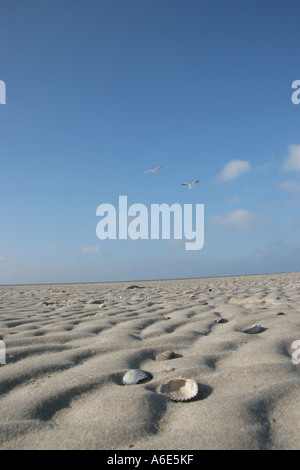 DEU, Federal Republic of Germany, Spiekeroog, beach of the east frisian North Sea island Spiekeroog - Stock Photo