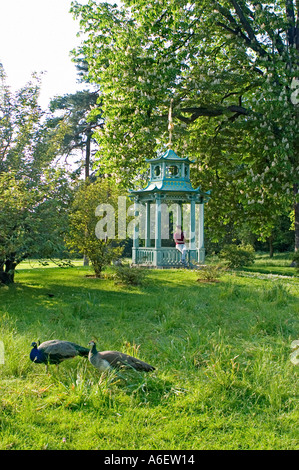 Enjoying nature in Paris FRANCE, Urban Parks Scenic with Pheasant Birds in Bagatelle Gardens in  Bois de Boulogne - Stock Photo