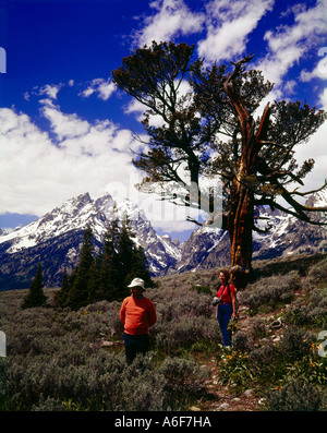 Two hikers take it all in as they trek through Grand Teton National Park in Wyoming under the branches of a Limber - Stock Photo
