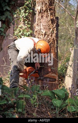 tree surgeon felling tree worcestershire england uk - Stock Photo