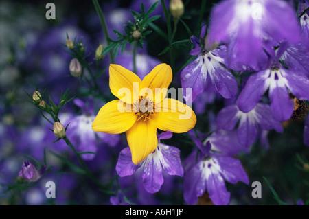 A vibrant yellow flower - Stock Photo