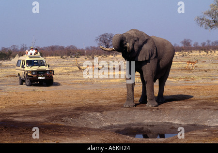 A BULL ELEPHANT drinks from a manmade watering hole in the SAVUTI MARSH which dried up in the 1960 s CHOBE NATIONAL - Stock Photo