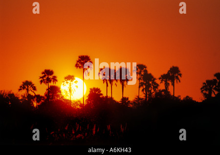 The sunset silhouettes PALM TREES at DELTA CAMP in the OKAVANGO DELTA BOTSWANA - Stock Photo
