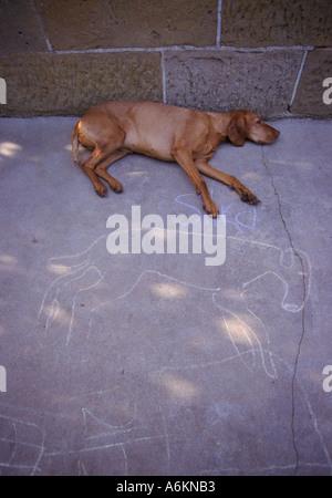Let sleeping dogs lie, Tasmania Australia, - Stock Photo