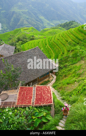 Drying red pepper with village house in rice terrace mountain Longsheng Guangxi Province China - Stock Photo