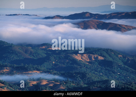 Coastal fog in morning and trees on the forest hillsides and ridges near Mount Tamalpais State Park Marin California - Stock Photo