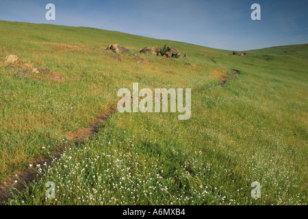 Trail through wildflowers and green grass field ranch pasture in spring Mariposa County Sierra Foothils California - Stock Photo