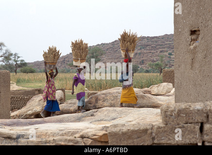Dogon women carrying millet from the fields to their village of Kani Kombole, where they will pound it into flour, - Stock Photo