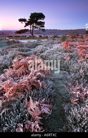Dawn on a cold and frosty morning in the New Forest National Park, Hampshire - Stock Photo