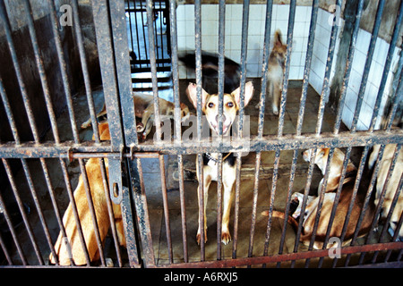 Street stray dogs behind bars being cared for in Bombay, India - Stock Photo