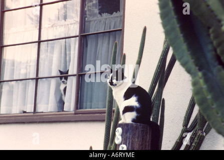 Cat On Post Near Cactus Plant Arm, Second Cat Peering Out Of Window - Stock Photo