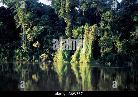 Amazon rainforest Brazil Preserved river margin APP Áea de Preservação Permanente Permanent preservation area - Stock Photo