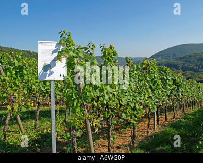 information about wine growing on vineyards along the hiking trail - Stock Photo