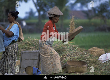 Asia, Indonesia, Bali. Workers in rice paddies