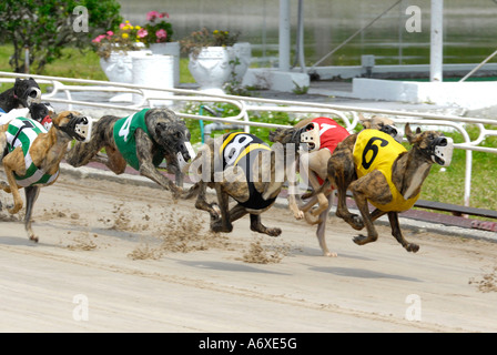 Sarasota Dog Kennel Racing
