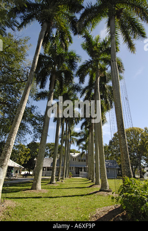 Southwest Ft Fort Meyers Myers Florida FL Edison and Ford Winter Estates Royal Palm Trees - Stock Photo
