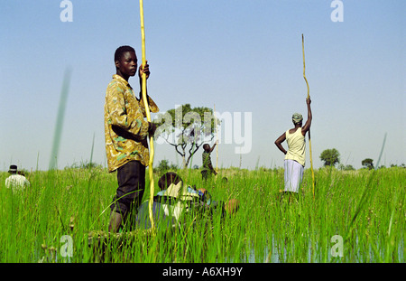 local people act as guides punting tourists around in mokoros canoes in the marshes of the Okavango delta botswana - Stock Photo