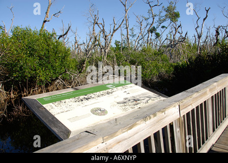 Southwest FL Florida Ft Fort Meyers Myers J N Ding Darling National Wildlife Refuge Sanibel Island - Stock Photo