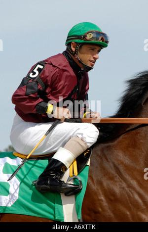 Thoroughbred horse racing Tampa Bay Downs Florida FL Tampa - Stock Photo