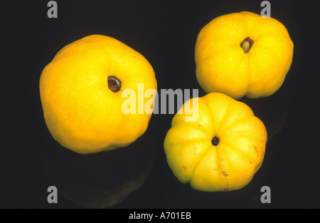 food fruit fruits quinces quitten