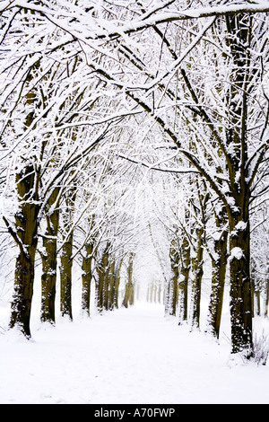 Snow covered trees taken at Coate Water Country Park - Stock Photo
