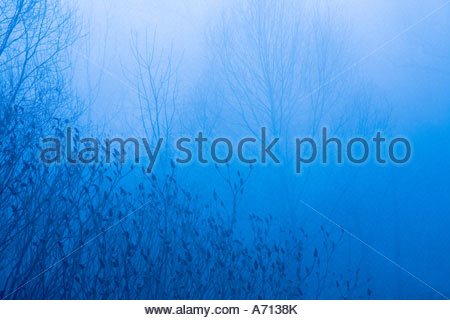 Fog in Bluffers Park located in the Scarborough area of Toronto Ontario Canada - Stock Photo