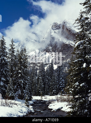 Kane Creek flows beside snow covered evergreens in winter below cloud shrouded Devil Bedstead Mountain Pioneer Mtns - Stock Photo