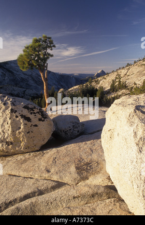 AJ3802, California, CA, Yosemite National Park - Stock Photo
