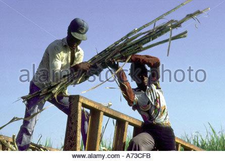 DOMINICAN REPUBLIC Haitian canecutters load a sugar train on a plantation in La Romana - Stock Photo