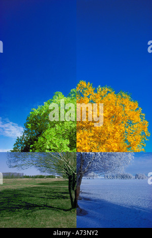 Tree in the four seasons - Stock Photo