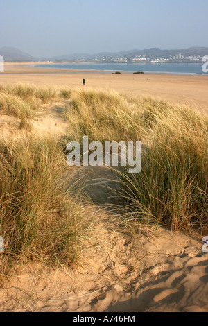 among the sand dunes at Ballymastocker Strand near Portsalon in County Donegal, Republic of Ireland - Stock Photo