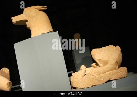 Iberian wolf of the deposit The Pajarillo Huelma Provincial museum of Jaen JAEN Andalusia Spain - Stock Photo