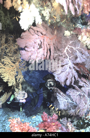 Oceania, Fiji. Diver Peers out from crevice. Hole is flanked by brilliant sea fans and other soft corals. - Stock Photo