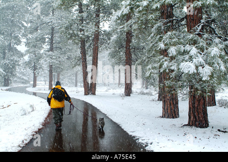 A man walking his dog on a path through snow covered trees in Grand Canyon National Park Arizona - Stock Photo