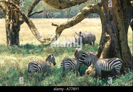 Different wild animals together - photo#53
