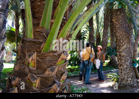 Priest Orchard / The Elx Palm Grove / ELCHE / Alicante province / Valencia Autonomous Community / Spain - Stock Photo