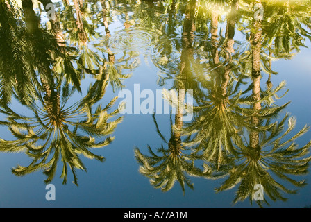 Priest Orchard in The Elx Palm Grove ELCHE Spain - Stock Photo