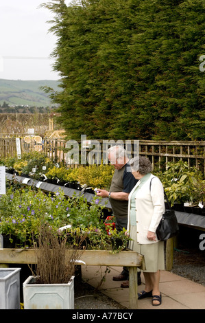 Couple looking at plants on sale at Newman's Garden centre Aberystwyth Ceredigion wales cymru UK - Stock Photo