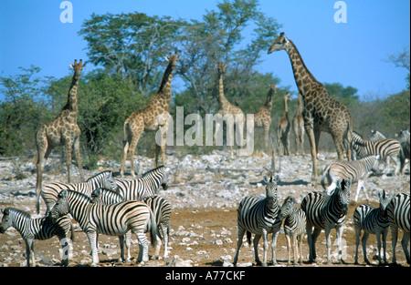 Different wild animals together - photo#48