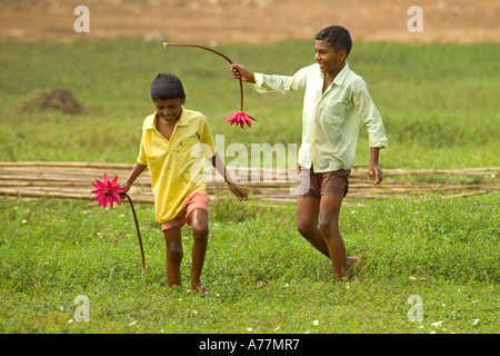 Two local Indian boys picking red spider water lilies (Nymphaea) near a lake in Goa. - Stock Photo