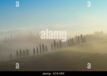 Cypress trees in early morning fog Tuscany Italy - Stock Photo