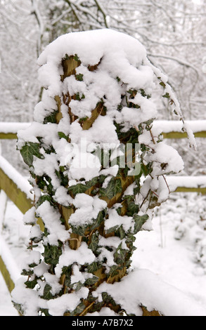 Woodland nature reserve covered in snow at Allt Yr Yn Newport South Wales UK - Stock Photo