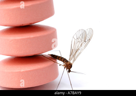 Anti Malaria tablets Malarone with mosquito in close up Made by Glaxo Smith Kline - Stock Photo