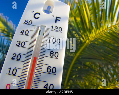 HOLIDAY SUN FORCAST TEMPERATURE Thermometer displays a warm and sunny 25 degrees centigrade against a palm tree - Stock Photo
