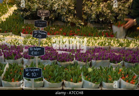 Flower market in the central Amsterdam along Singel canal - Stock Photo