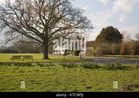 TILFORD SURREY UK March Looking across the daffodil surrounded village green towards the popular Barley Mow Pub - Stock Photo