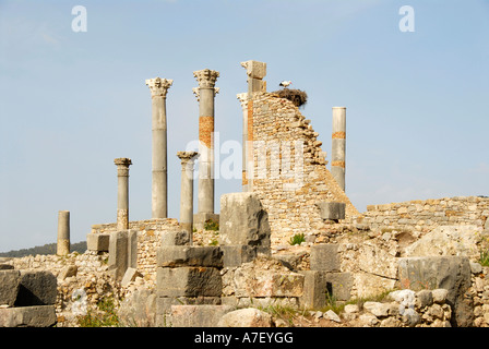 Pillars with a storks nest White Stork Ciconia ciconia archaeological excavation of antique Roman city Volubilis - Stock Photo