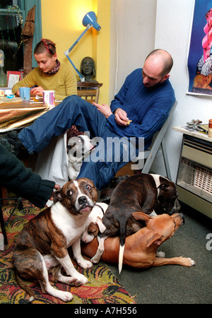 Portrait of man with family of Staffordshire terriers living in a south London squat. - Stock Photo